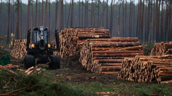 Forest clearing machinery stand beside log piles during forest clearing work for the Tesla Inc. Gigafactory in Gruenheide, Germany. File photo: Bloomberg. (Bloomberg)
