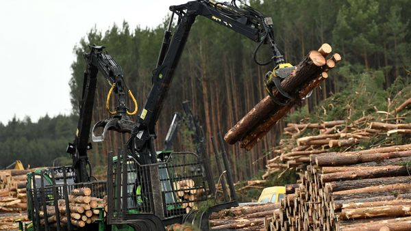 File photo: German municipality Gruenheide's mayor has said Tesla should be able to start work on the foundation of its factory near Berlin next month after having cleared trees at the site. (REUTERS)