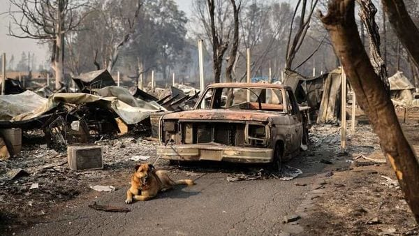 A dog is tied up to a burnt car in a neighbourhood after wildfires destroyed an area of Phoenix, Oregon. (REUTERS)