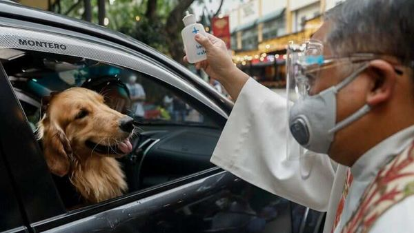 A Catholic priest sprinkles holy water on a dog aboard a vehicle at a drive-thru pet blessing amid the coronavirus disease outbreak on World Animal Day, in Eastwood Mall, Quezon City, Philippines, (REUTERS)