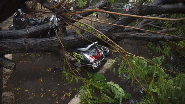 An uprooted tree can be seen on a parked two-wheeler in Navi Mumbai.