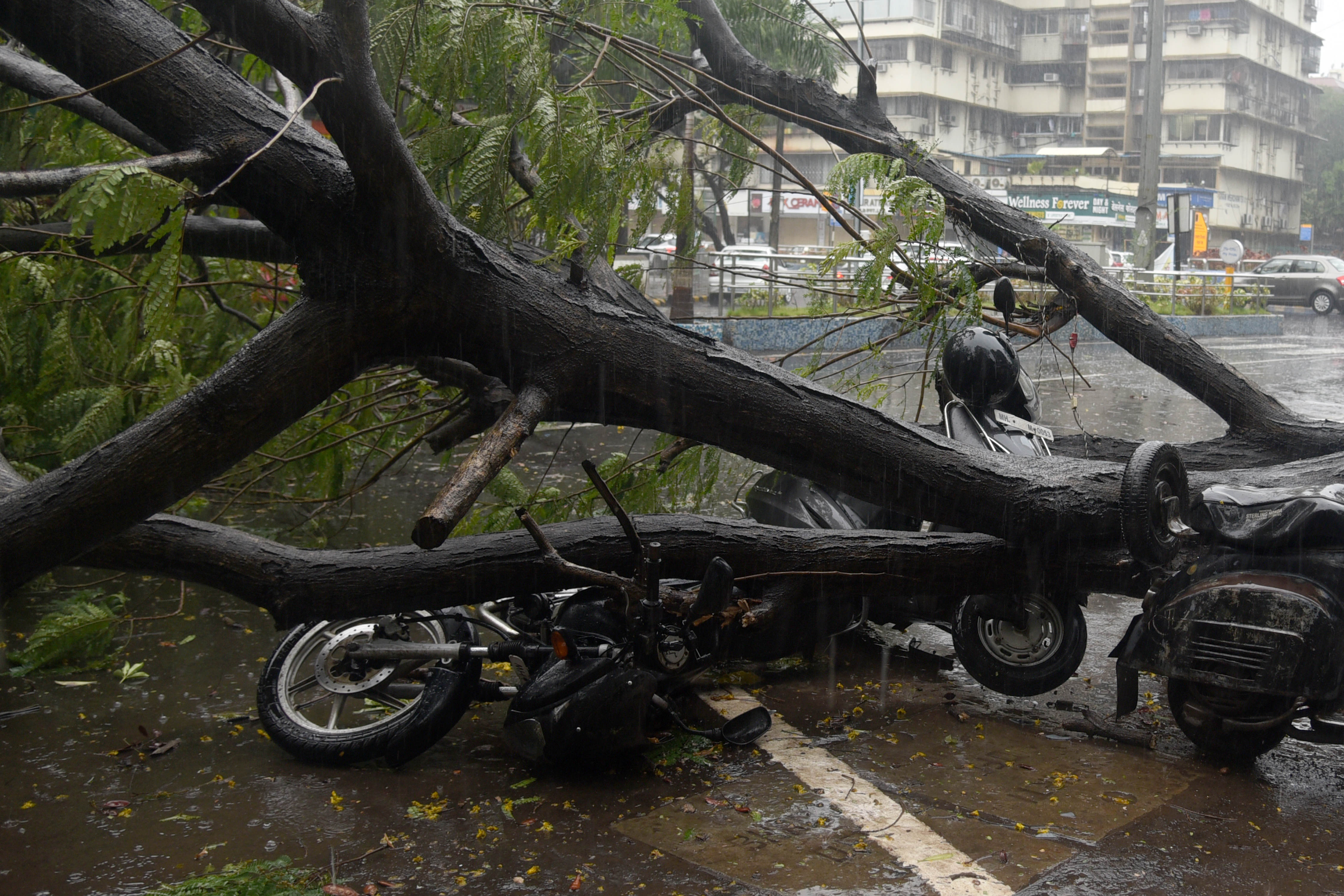 Here some two-wheelers which are damaged beyond repair can be seen under a fallen tree in Navi Mumbai.