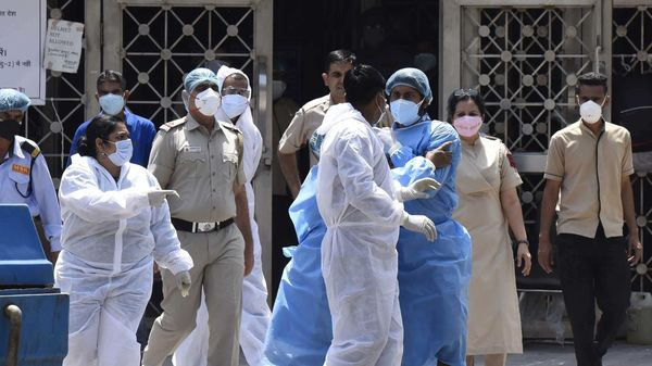 Coronavirus positive cases rise to 804 in Rajasthan