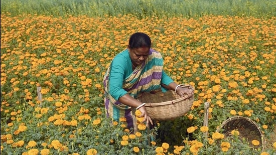 The pandemic has left women farmers even more economically vulnerable, and added the burden of caring for out-of-school children and the sick and elderly. Covid-19 has also decreased remittances to women farmers left at home. With more migrants coming home, there is also greater demand on the land, putting the tenuous hold of women on land in greater jeopardy. (Getty Images)