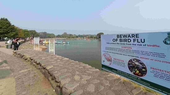 An advisory at Sukhna Lake in Chandigarh listing bird flu precautions on January 9. The entire state of Punjab has been declared a 'controlled area' in view of the outbreak affecting birds in neighbouring states. A complete ban has also been imposed on the import of live birds including poultry and unprocessed poultry meat into the state till January 15, according to a Punjab government statement.(Ravi Kumar / HT Photo)