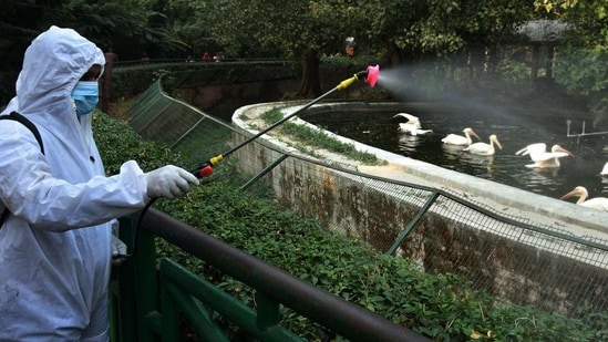 A worker sprays disinfectant near a bird enclosure at Lucknow Zoo as a preventive measure on January 9. Kanpur Zoological Park has been closed for visitors for 15 days after a suspected case of bird flu has been detected in the zoo.(Dheeraj Dhawan / HT Photo)