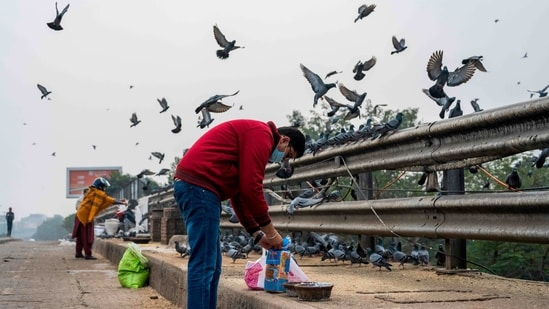 A man feeds a flock of pigeons on a bridge in New Delhi on January 9. Seven states – Uttar Pradesh, Madhya Pradesh, Rajasthan, Gujarat, Kerala, Haryana and Himachal Pradesh – have reported the outbreak, which began in December-end. No case among the human population has been reported.(Jewel Samad / AFP)