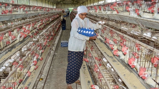 A woman collects eggs at a poultry farm. (PTI)