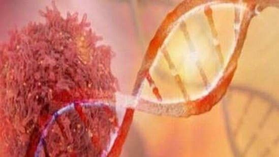 After defining extensive cellular heterogeneity, researchers from The University of Texas MD Anderson Cancer Center developed a tool that might be useful in stratifying patients with gastric cancer and directing them for more effective treatment strategies.(ANI)