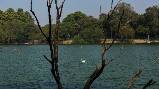 A goose swimming in a lake at Hauz Khas in New Delhi on January 11. Apart from the Sanjay Lake Park and the one in Dwarka Sector 9, the Delhi Development Authority (DDA), which maintains most of the big parks in the city, has shut down at least two parks — in Hauz Khaz and Hastsal.(Biplov Bhuyan / HT Photo)