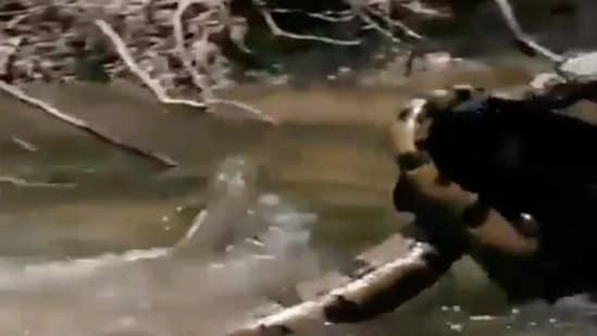 The image shows a black panther and an anaconda. (Screengrab)