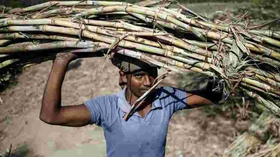 New Dehli agreed last week to subsidise up to 6 million tonnes of sugar exports this season to try to cut surplus stocks and support local prices(REUTERS)
