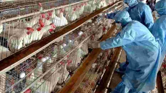The Delhi government had on Monday confirmed the spread of avian influenza in the Capital, shut the Ghazipur wholesale poultry market for 10 days, and banned the entry of live birds into the city without proper health certification from authorised veterinarians.(AP Photo/Ajit Solanki)