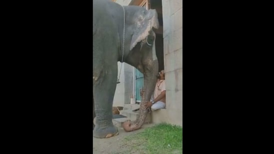 The image shows the elephant and the mahout.(Screengrab)