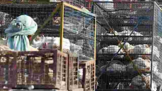 Municipal officials said that bird flu tests of the samples collected from Ghazipur poultry market were found to be negative and orders were issued on Thursday to open the wholesale market by the Delhi government.(PTI)