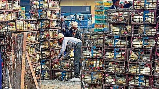 Vendors at Ghazipur poultry market organise their stock on Friday( Raj K Raj/HT PHOTO)