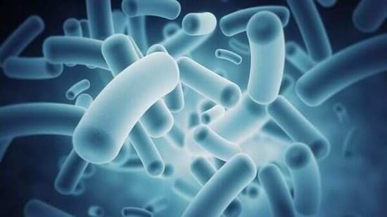 Scientists studying the body's natural defenses against bacterial infection have identified a nutrient, taurine that helps the gut recall prior infections and kill invading bacteria, such as Klebsiella pneumoniae (Kpn).(ANI)