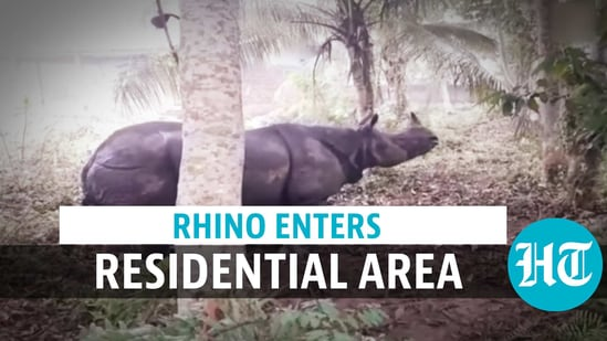 A rhinoceros was spotted in a residential area in Assam on January 16
