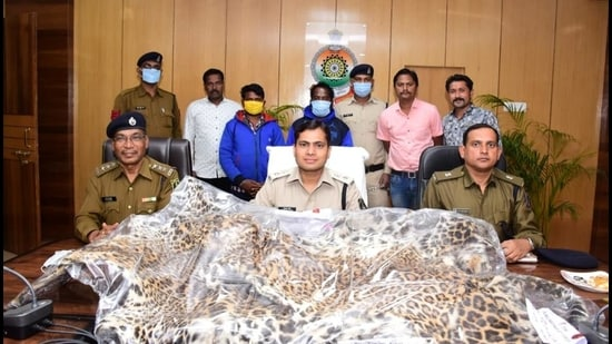The seized leopard skins. (HT Photo)