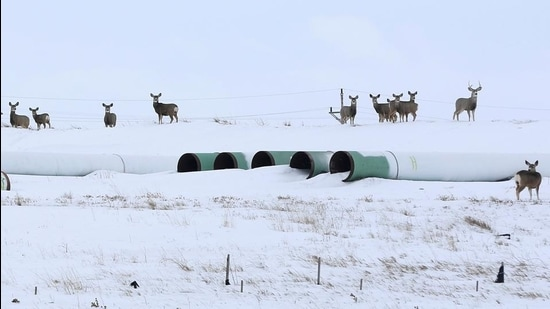 Deer gather at a depot used to store pipes for the planned Keystone XL oil pipeline in Gascoyne, North Dakota. (Reuters file)