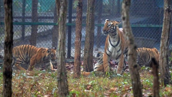 Bengal safari has been set up over 700 acres of forest land in Siliguri.(Twitter/@ANI)