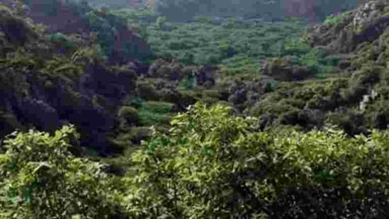 """""""We also explained to them that these are tiger habitats, thick forests and biodiversity hotspots and that they should be preserved and cared for. We are opposed to all the three projects because it will be damaging to the ecosystem,"""" Kerkar said.(Manoj Kumar/HT Photo. Representative image)"""