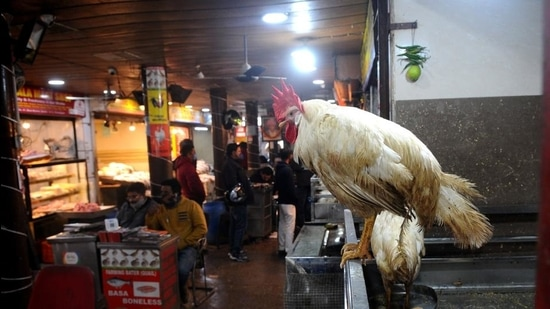 Sales have started to pick up at the chicken market in sector 21, say sellers. (Ravi Kumar/HT)