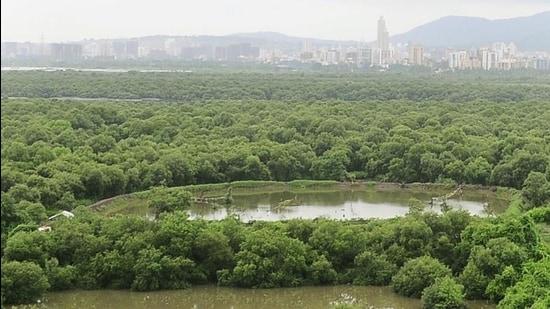 India-mangroves