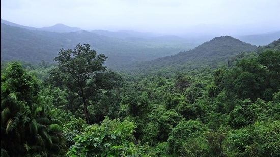 The cumulative forest land that is to be diverted for the three projects inside the protected area is 163.43ha while the cumulative forest land required for such projects outside the protected area is believed to be another 200ha of forest land. (HT Photo)