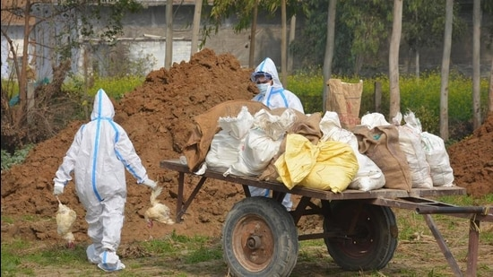 Ten teams have been constituted to cull 25,000 birds at Evergreen poultry farm.