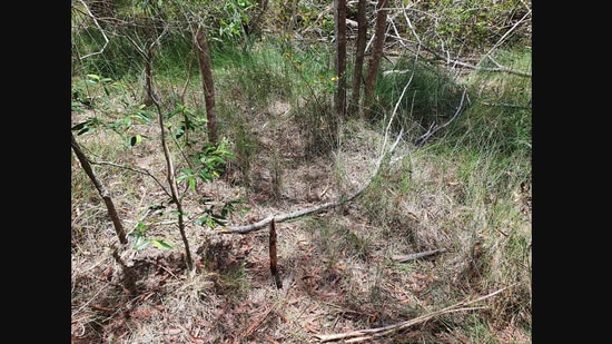 There is a snake hiding in plain sight in the image.(Facebook/@@SunshineCoastSnakeCatchers)