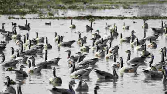 World Wetlands Day: The origin, purpose and theme this year   Hindustan Times