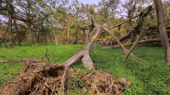 According to the report filed in February last year but made public on Wednesday, a tree is worth <span class='webrupee'>₹</span>74,500 a year.(PTI)