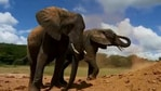 The image shows two elephants named Lima Lima and Murera.(Twitter/@SheldrickTrust)
