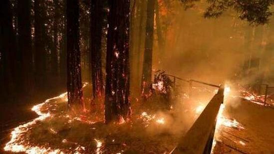 Lightning Complex fire consumes trees and a fence along Empire Grade Road in the Santa Cruz Mountains community of Bonny Doon near Santa Cruz, California. (AP)