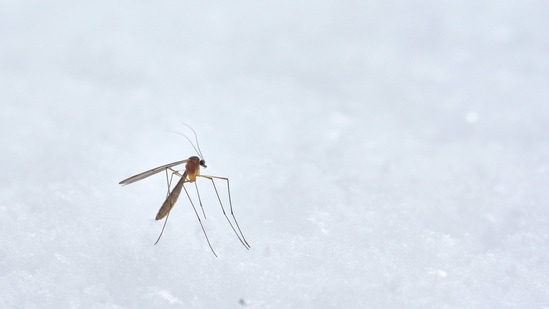In order to engineer advanced forms of defence against malaria transmission, including targeted CRISPR and gene drive-based strategies, scientists require intricate knowledge of the genomes of vector mosquitoes.(Unsplash)