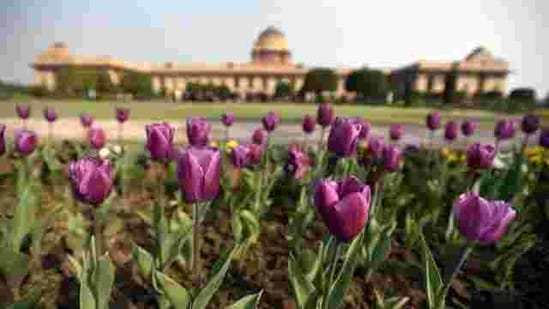 Tulips bloom at The Mughal Garden at the President's Estate .(Sonu Mehta/HT PHOTO)