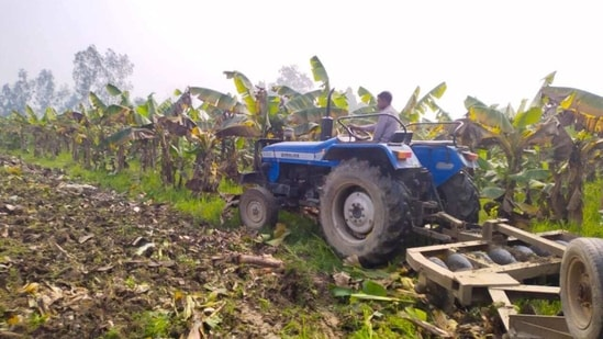 The banana crops were ready in January but the three farmers failed to get buyers and proper rates. It was then that they ploughed and destroyed their crops by a tractor. (HT PHOTO).