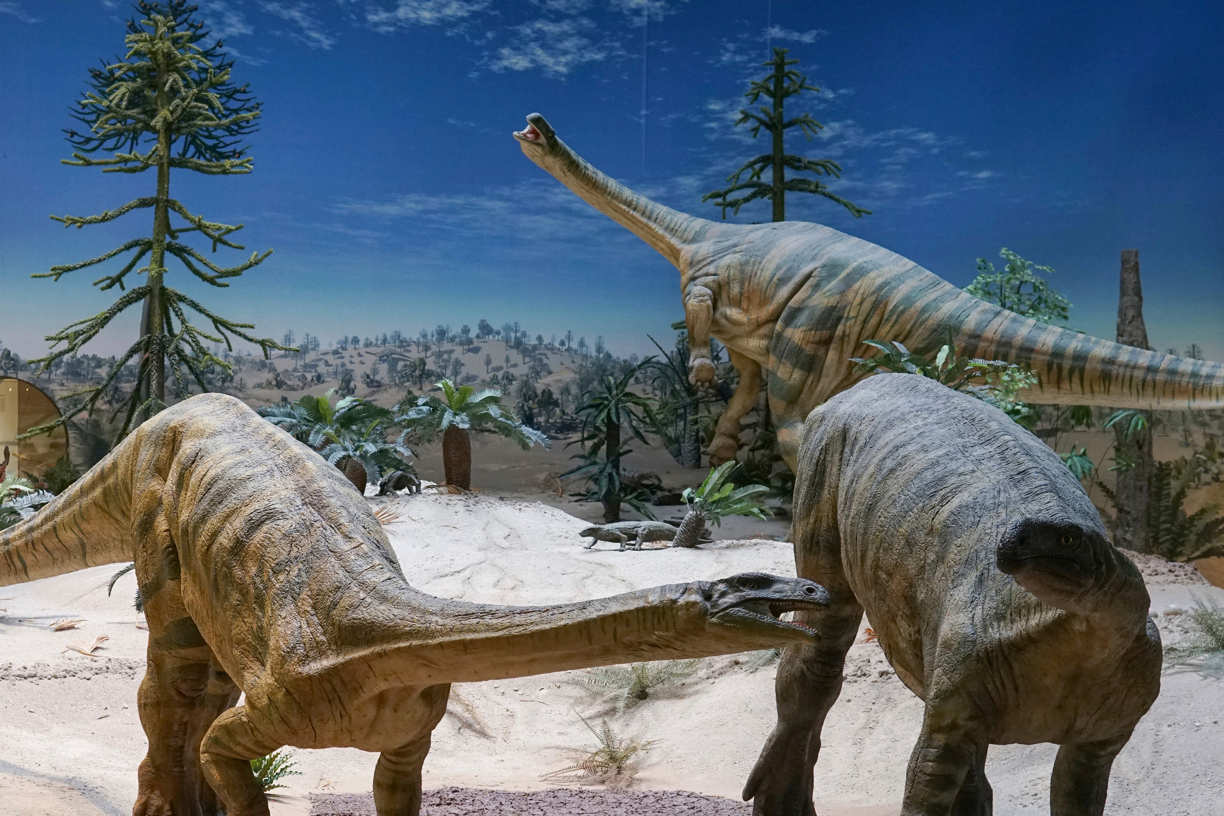 This photo provided by Randall Irmis shows Plateosaurus models at the State Museum of Natural History in Stuttgart, Germany. Plant-eating dinosaurs such as these probably arrived in the Northern Hemisphere many millions of years later than their meat-eating cousins.(AP)