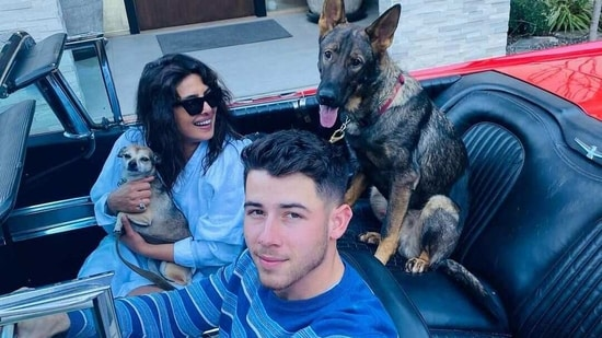 Priyanka Chopra and Nick Jonas with their dogs.