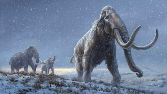 Million-year-old Siberian mammoth teeth yield oldest DNA ever recovered - Hindustan Times