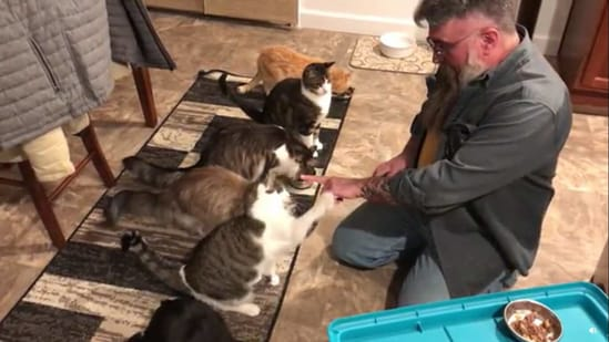The cats are named Valerie, Angela, Benjamin, Michaelangelo, Simon, Omar and Marigold from left to right. Aren't they all delightful?(Reddit/drekicreations)