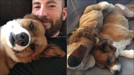 Chris Evans sews pet dog's stuff toy to surprise it after surgery, wins hearts(Instagram/chrisevans)
