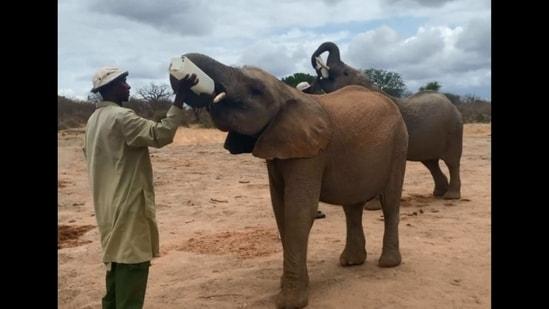 The image shows the keeper feeding the elephant.(Instagram/@sheldricktrust)
