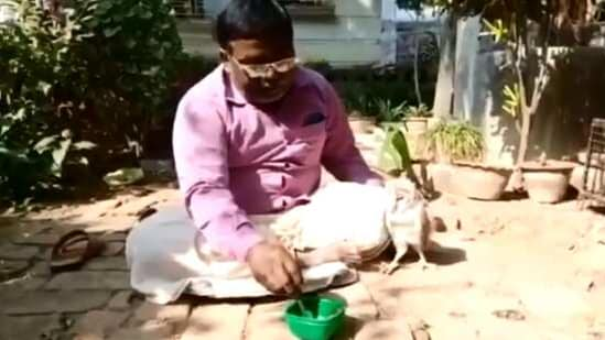 The image shows the teacher feeding the owl.(Twitter/@ParveenKaswan)