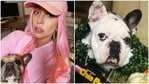 Lady Gaga's dogs Koji and Gustav have been dognapped at gunpoint.