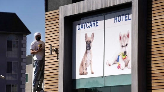 A picture of a French bulldog is featured above the entrance of Dog-E-Den Hollywood near an area on North Sierra Bonita Ave. where Lady Gaga's dog walker was shot and two of her French bulldogs stolen, Thursday, Feb. 25, 2021, in Los Angeles. The dog walker was shot once Wednesday night and is expected to survive his injuries. The man was walking three of Lady Gaga's dogs at the time but one escaped. (AP Photo/Chris Pizzello)(AP)