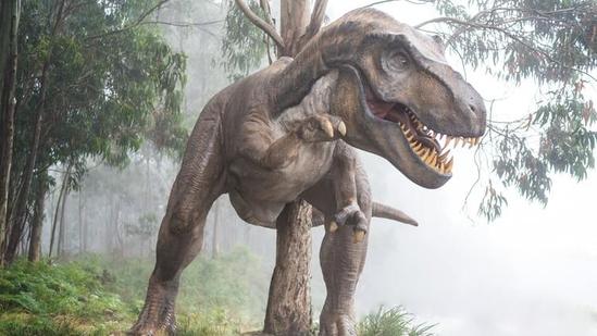 Tyrannosaurus rex(Unsplash)