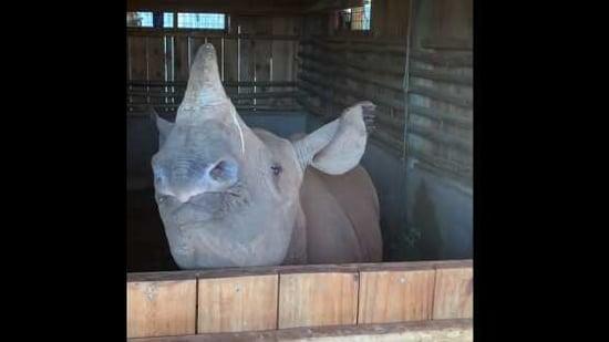 The image shows the baby rhino named Apollo.(Instagram/@sheldricktrust)