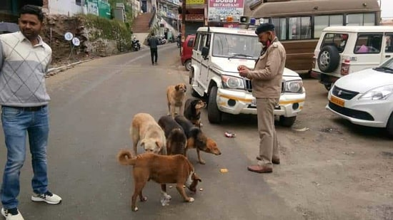 """The petitioner-animal lovers, represented by advocate Abhik Chimni, told the court whenever they try to feed the street dogs, """"enormous resistance is caused by the local residents"""".(HT PHOTO)"""
